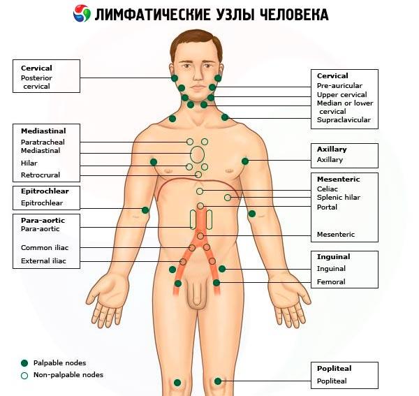 Ganglioni limfatici – inflamarea semn de cancer | boldcharts.ro