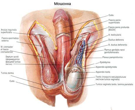 cum se îndepărtează penisul și testiculele)