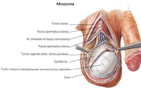 penisul dispare erecția ce trebuie luat pentru a crește erecția
