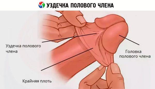 supurația penisului)