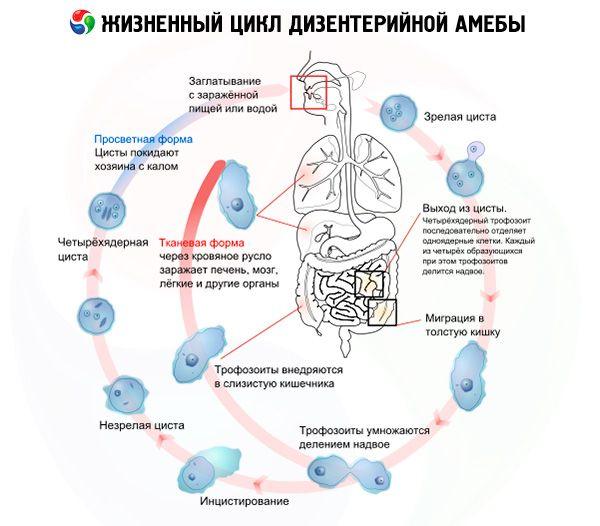 are amoeba pierderea în greutate sfaturi pentru slăbire